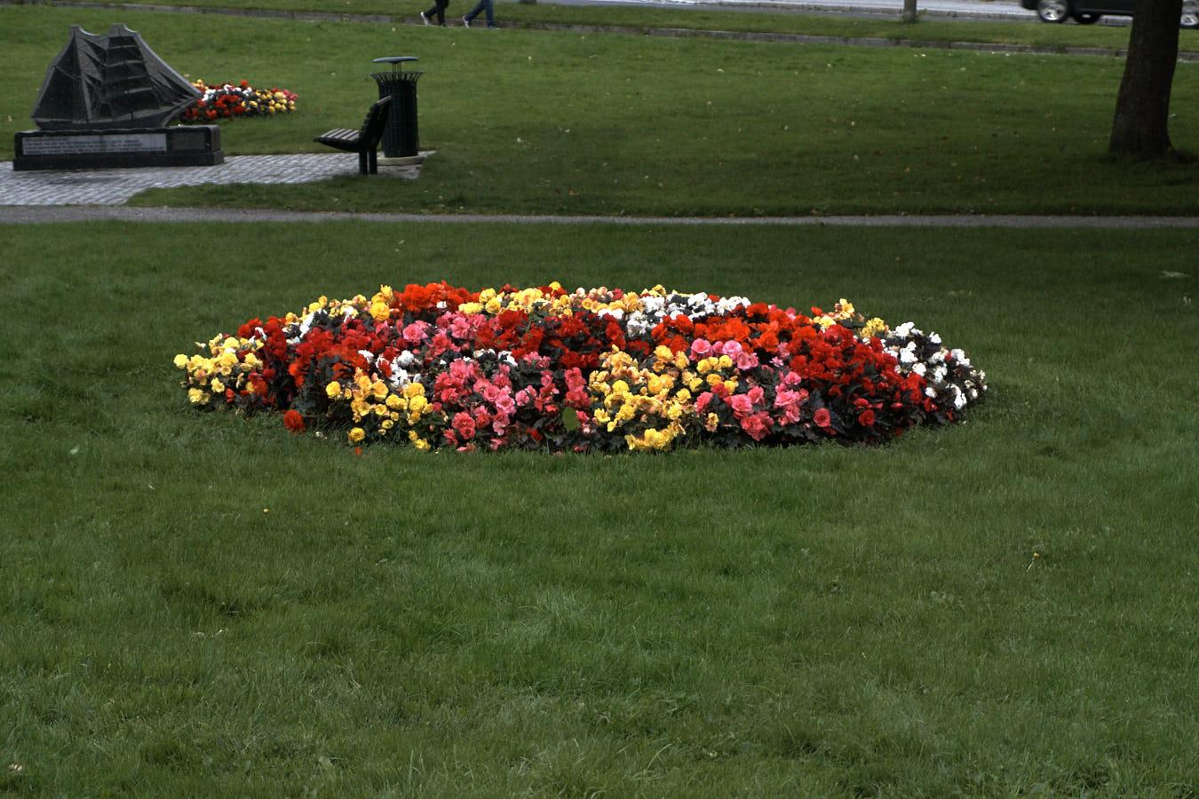 Auch Blumen gab es noch Ende August