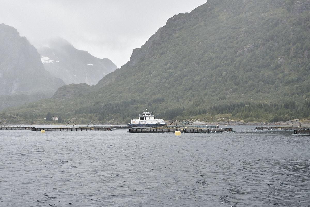 Aquakultur bei Svolvaer