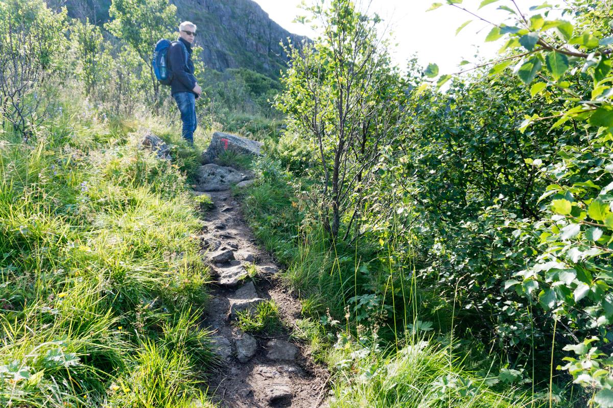 Die Dronningruta führt antlang der Küste durch kleine Büsche.