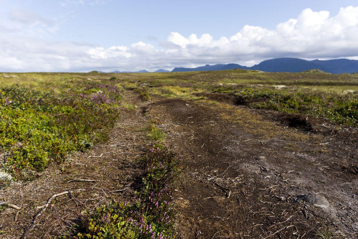 Der Wanderweg zum Leuchtturm führte durch eine Moorlandschaft. Wir mussten genau aufpassen, wo wir hintreten.