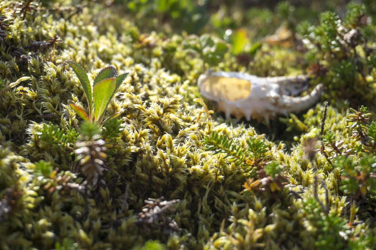 Überall an Land findet man Reste von Schalentieren, die die Möwen fallengelassen haben.