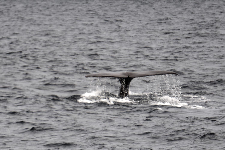Arctic Whale Tours