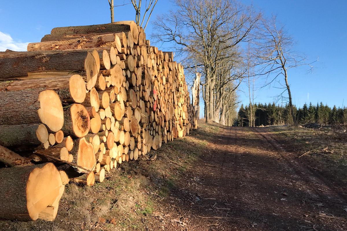 Das Holz duftet herrlich. Riecht ihr es auch?