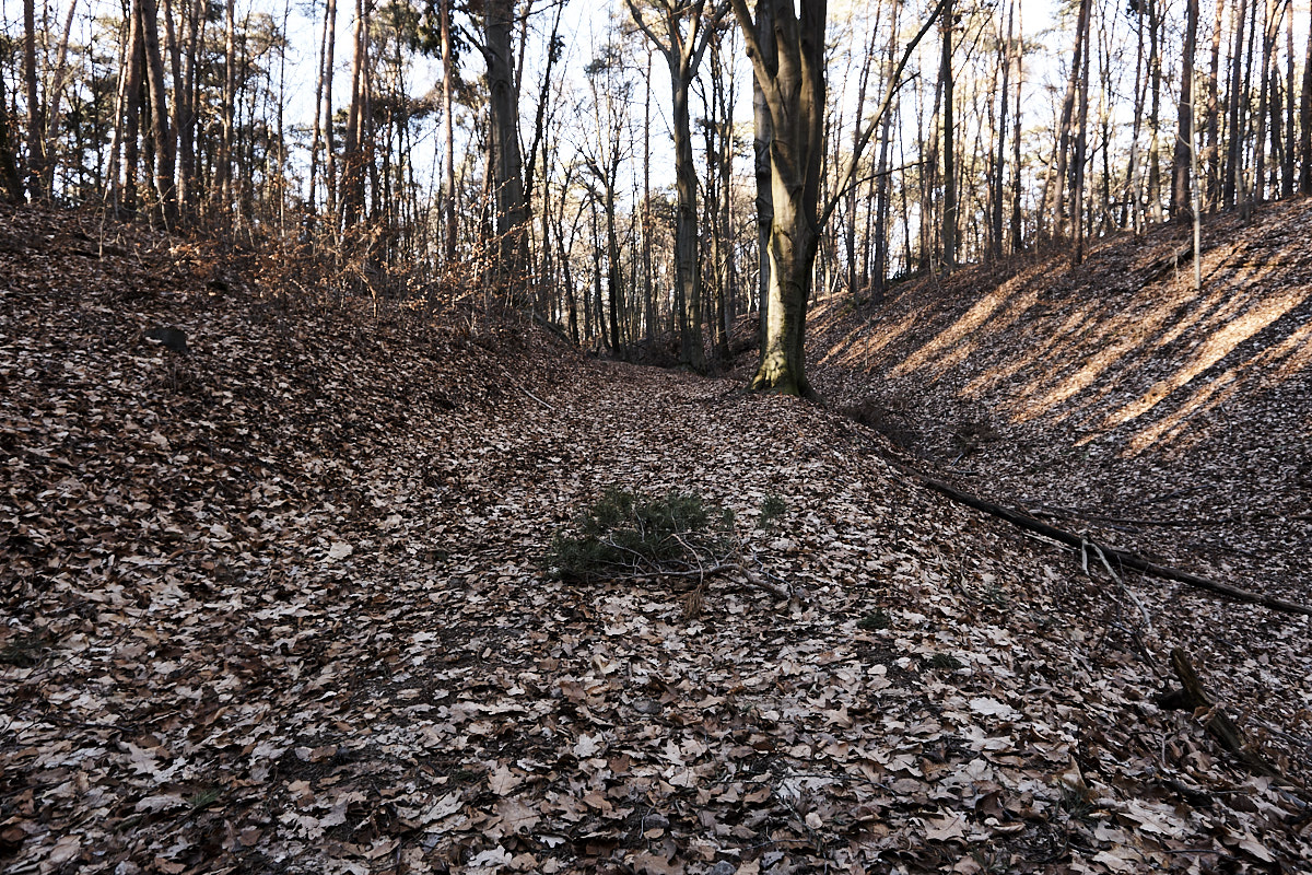 Waldweg zwischen Golk und Löbsal