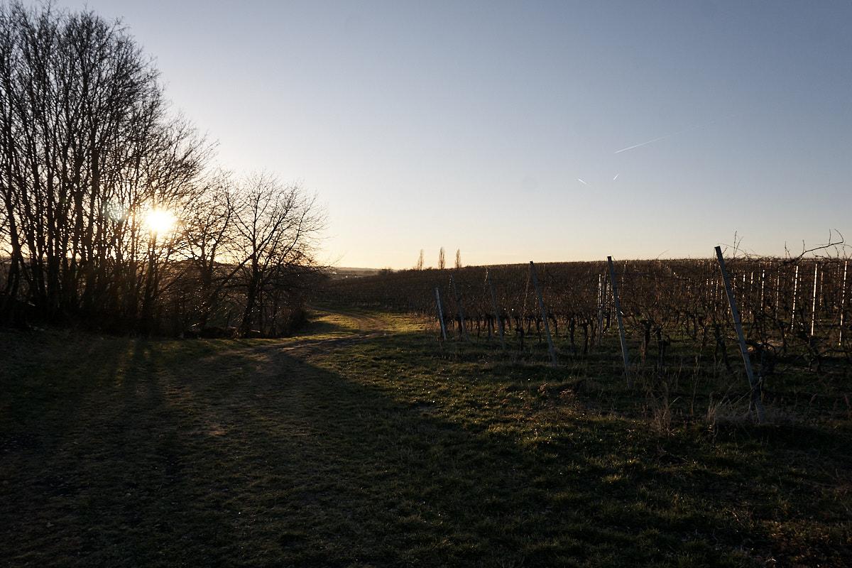 Der Weg führt mitten durch die Weinberge.
