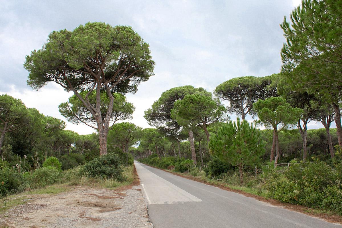 Zufahrt zum Strand durch den Pinienwald im Parco Naturale di Maremma.